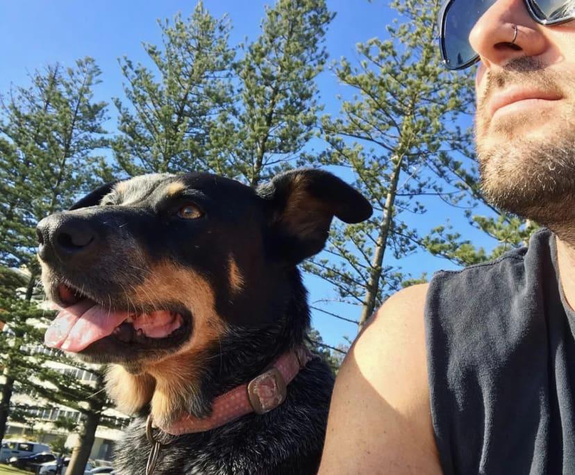 Matt (35), $350, Non-smoker, Have pets, and No children