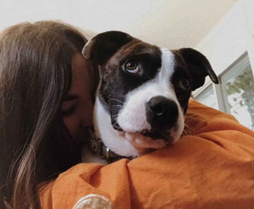 Tahlia (23), $300, Non-smoker, Have pets, and No children