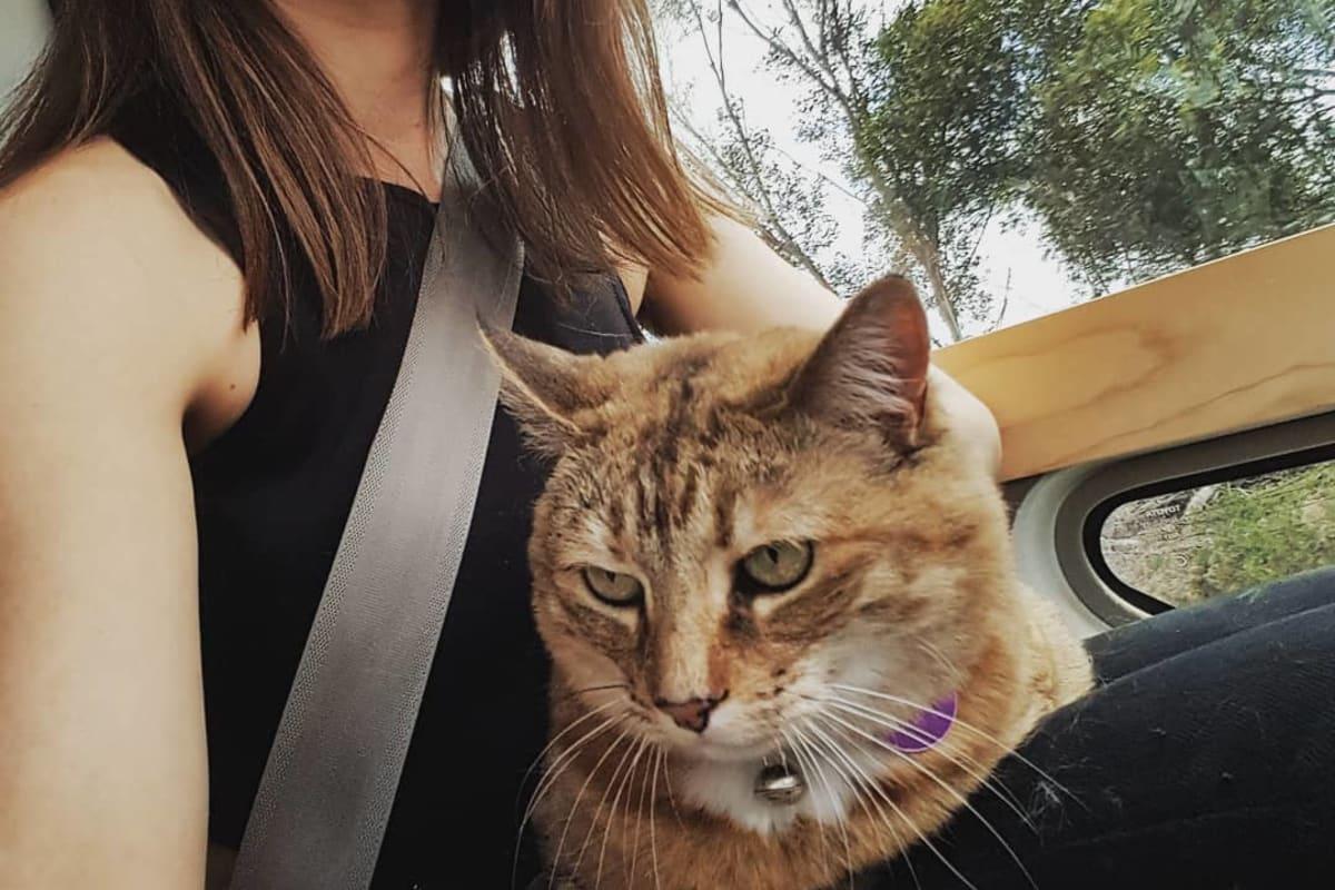 Koa Jay (24), $120, Non-smoker, Have pets, No children, and LGBT+