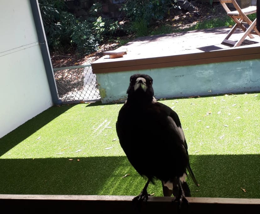 $215, Share-house, 2 bathrooms, Page Parade, Burleigh Heads QLD 4220