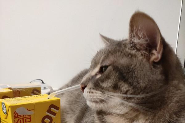Vivian (27), $220, Non-smoker, Have pets, and No children