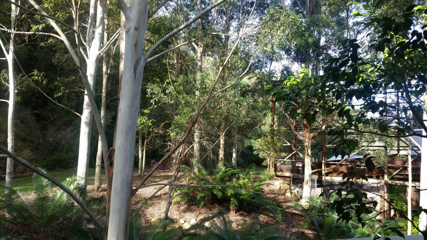 $300, Flatshare, 3 bathrooms, Consul Road, Brookvale NSW 2100