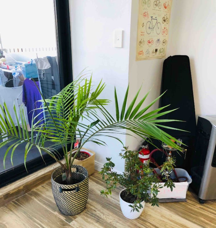Room for Rent in Australia Avenue, Sydney Olympic Pa ...
