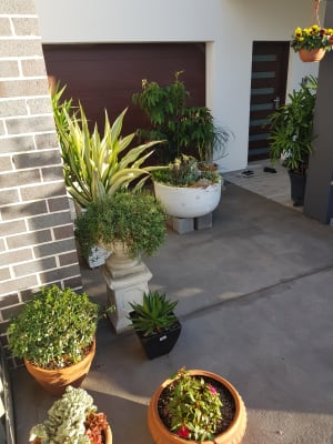 $210, Share-house, 4 bathrooms, Alan Street, Yagoona NSW 2199