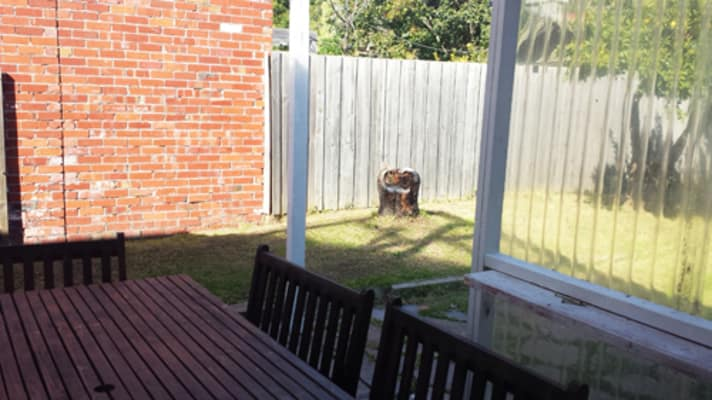 $250-350, Share-house, 3 rooms, Alexandra Street, Saint Kilda East VIC 3183, Alexandra Street, Saint Kilda East VIC 3183
