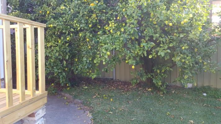 $205, Share-house, 6 bathrooms, Selborne Street, Burwood NSW 2134