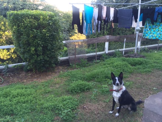 $240, Share-house, 3 bathrooms, Willmington Street, Newmarket QLD 4051