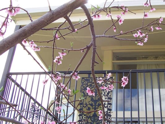 $180, Share-house, 4 bathrooms, Flagstaff Road, Flagstaff Hill SA 5159