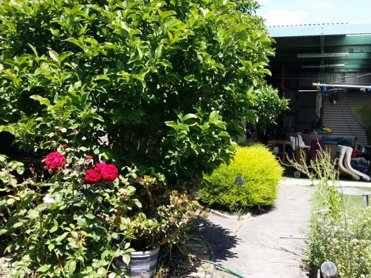 $140, Share-house, 4 bathrooms, Beaconsfield Parade, Northcote VIC 3070