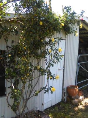 $220, 1-bed, 1 bathroom, Meynink Road, Hodgson Vale QLD 4352