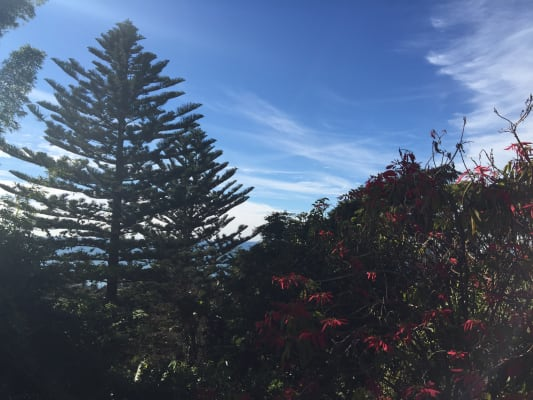 $320, Share-house, 2 bathrooms, Park Street, Collaroy NSW 2097