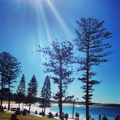 $290, Flatshare, 2 bathrooms, Oaks Avenue, Dee Why NSW 2099