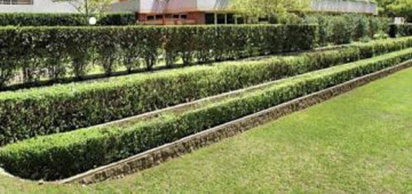 $370-460, Flatshare, 3 rooms, Dalmeny Avenue, Rosebery NSW 2018, Dalmeny Avenue, Rosebery NSW 2018